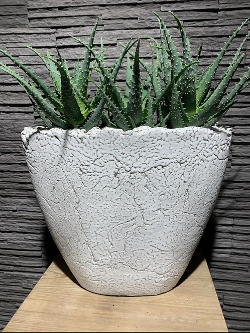 Aloe in handgemaakte pot