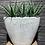 Thumbnail: Aloe