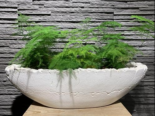 Asparagus in handgemaakte pot