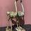 Thumbnail: Struisvogel setje