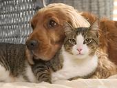 Dog & Cat.png