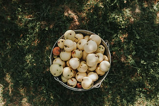 Fruit in Bucket