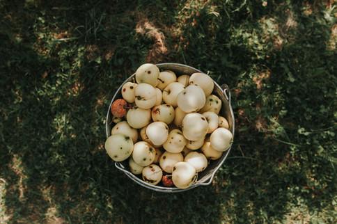 Obst im Eimer