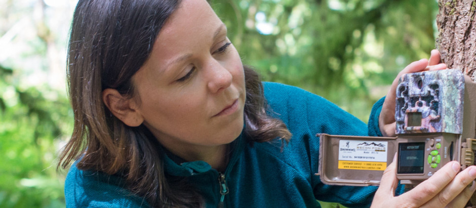 Melanie Clapham - Identifying Bears