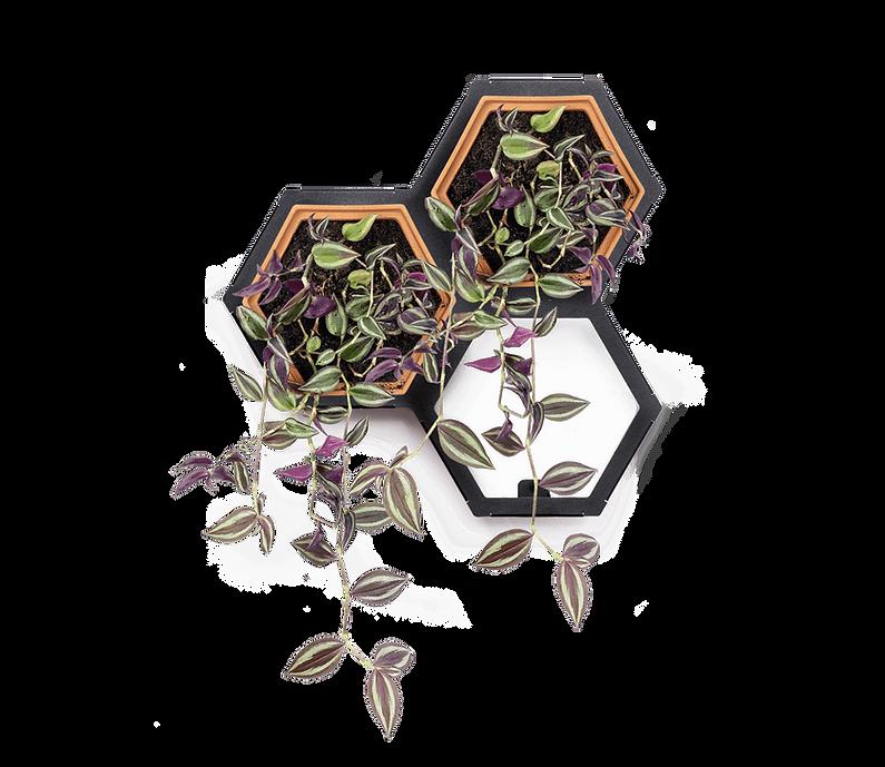 Horticus small living wall kit with Zebrina (Zebrina Pendula)