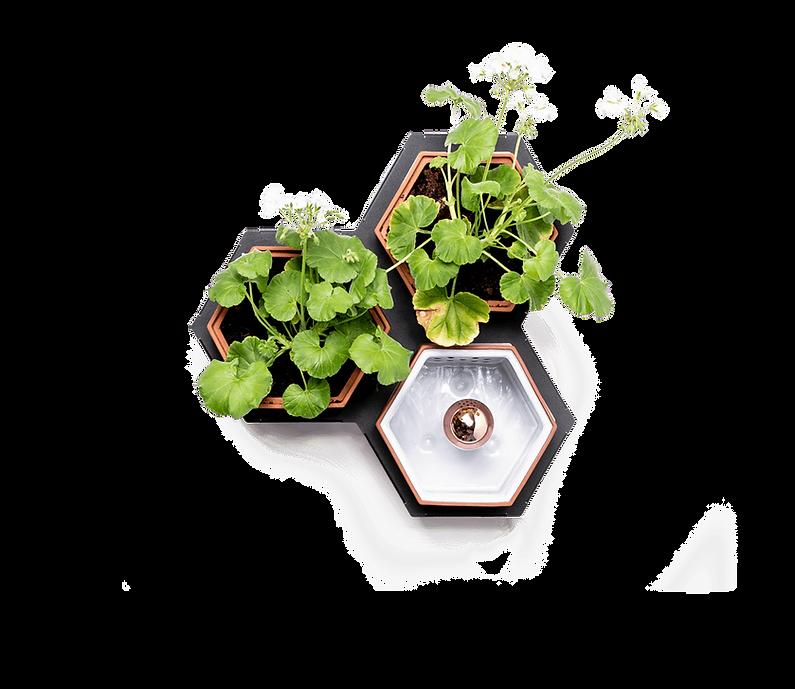 Horticus small living wall kit with Geraniums (Pelargonium Domesticum)