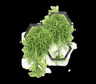 Horticus small living wall kit with Mistletoe Cactus (Rhipsalis Baccifera)