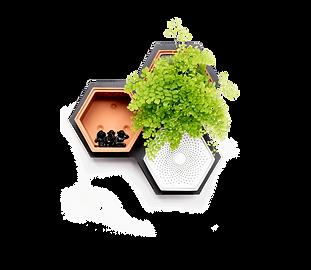 Horticus small living wall kit with Maidenhair Fern (Adiantum Tenerum)