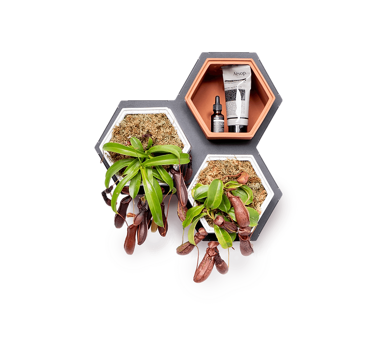 Horticus small living wall kit with Pitcher Plant (Nepenthes Alata)