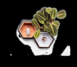 Horticus small living wall kit with Prayer Plant (Maranta Leuconeura)