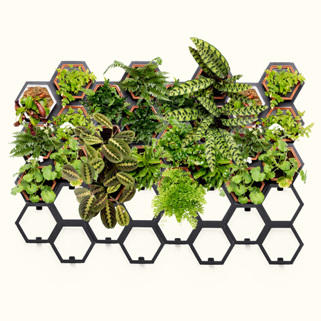 Horticus Extra Large Living Wall Kit