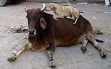 Angel Trust NGO stray animals love