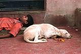Angel Trust NGO stray animals love humans