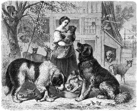 Origin of the Leonberger