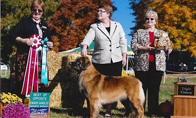 Cindy Stansell, Susan Townsend, Agi Hejja, Leonberger Triple Crown