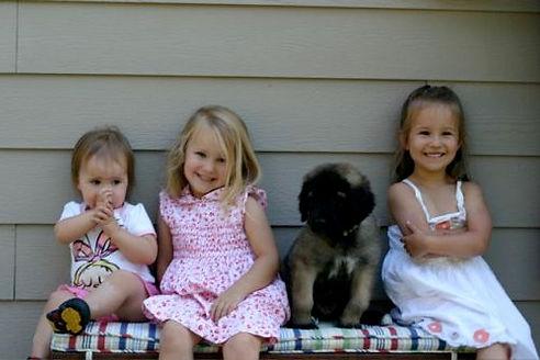 Sforzando Leonberge Puppy with Small, Young Children