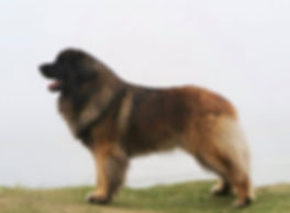 Dog Profile.jpg
