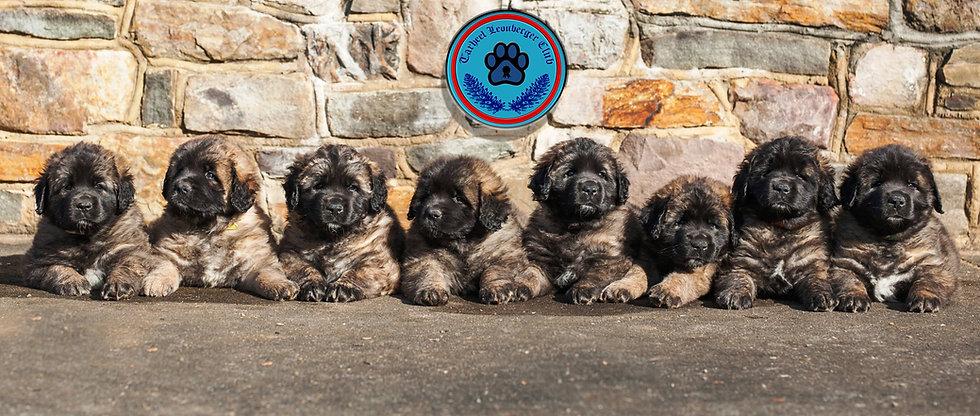 Tarheel Puppy Banner.jpg