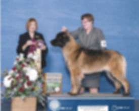 Basie, Leonberger, AKC Champion Leonberger, Best of Breed, Nancy Liebes