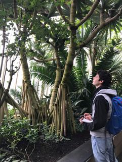 Jardinier Botaniste