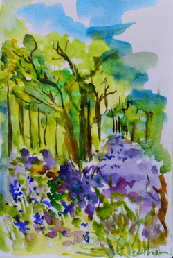 Jubilee Woods Buebells