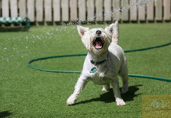 doggy daycare, Nose2tail doggy daycare, dog daycare
