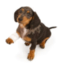 pet first aid, nose2tail, doggy daycare,