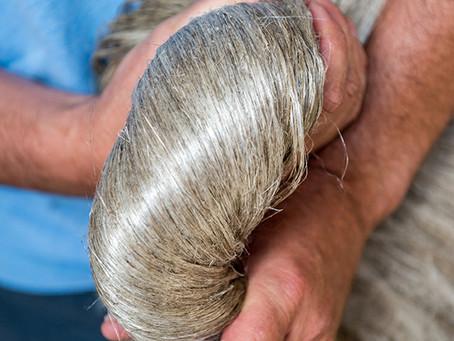 La fibre de lin