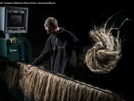 La fibre longue de lin