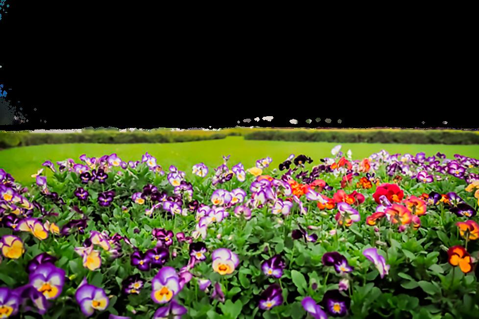 colorido-jardin-flores-parque-conmemorat