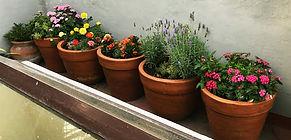 rooftop flowers.jpg