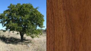 As 9 melhores madeiras que você nunca ouviu falar