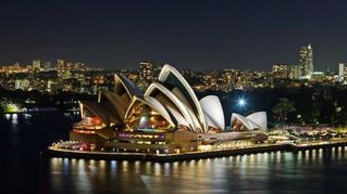 7 curiosidades sobre o Cedro Australiano Nativo que você precisa saber
