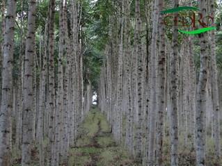 Por que o reflorestamento é importante para seu negócio?