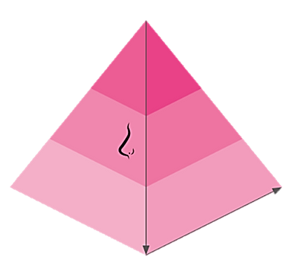 olfactory pyramid.png