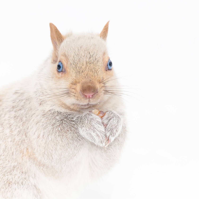 Julie_Garran_Albino_Squirrel_8ICA_Nominee.jpg