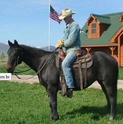 horse-for-sale-1-298x300.jpg