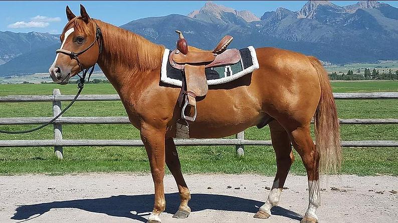 sale-horses-sundance.jpg