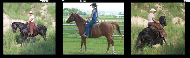 pg-horses-5.png