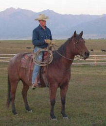 horse-for-sale-2-252x300.jpg
