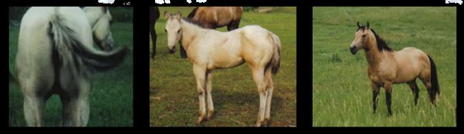 pg-horses-6.png