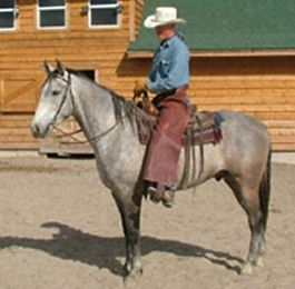 horse-for-sale-4-300x294.jpg