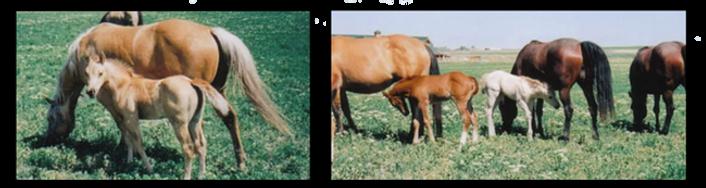 pg-horses-7.png
