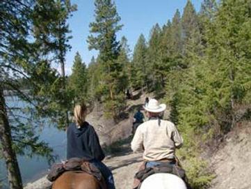 horse-training6.jpg
