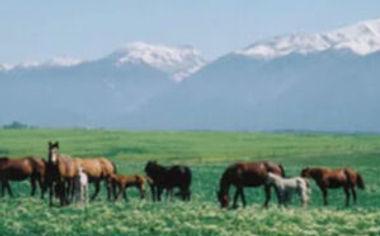 pg-horses-3-300x186.jpg