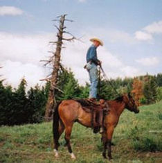 horse-training4.jpg