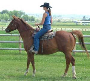 horse-training5.jpg