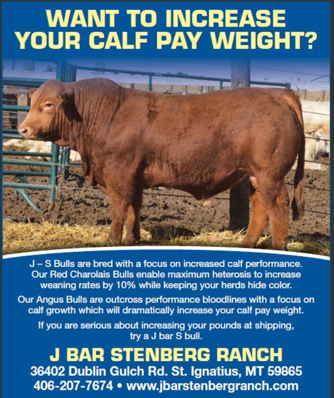 Bull promo.jpg