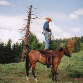 pg-horses-4-1-300x300.jpg