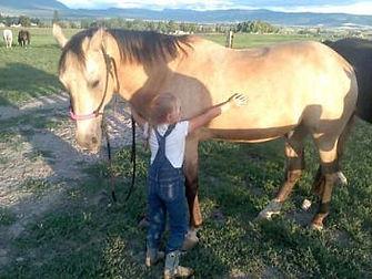 horse-training2.jpg